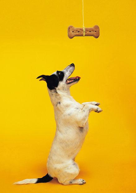 dog-reward