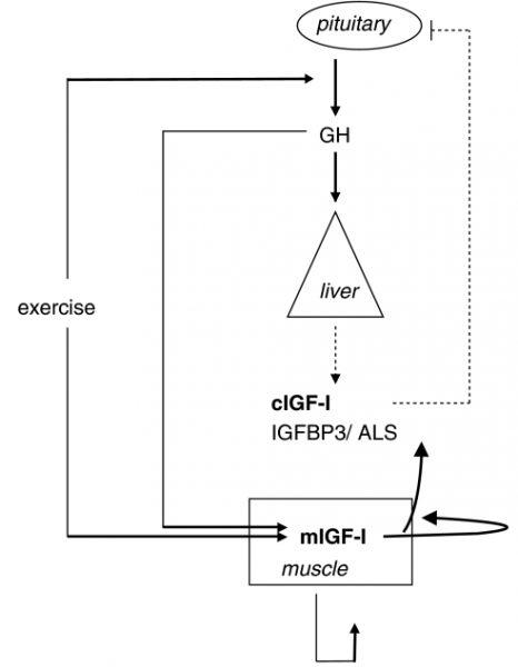 HGH-IGF1
