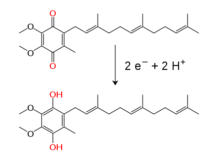 Ubiquinone–ubiquinol_conversion