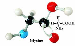 glycine-formule